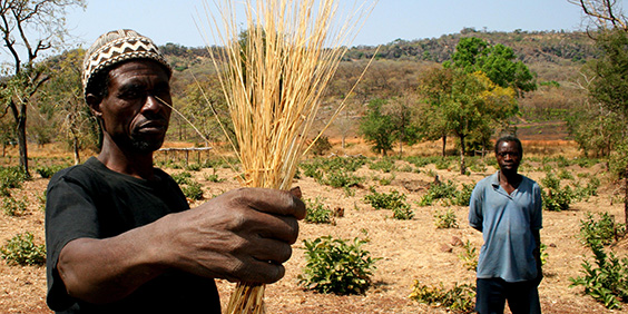 German government funds 1.2 million insurance policies for vulnerable African farmers